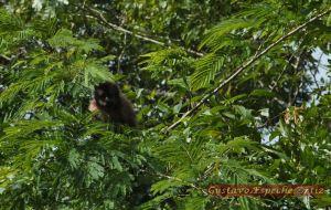 Iguazu11(2)3578